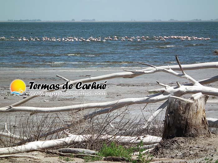 Lago Epecuén - Termas de Carhué